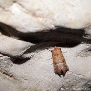 Айские Притёсы и Улуирский пещерный комплекс